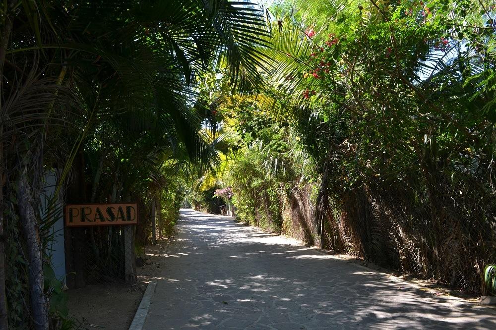 メキシコ・マスンテの木々の写真