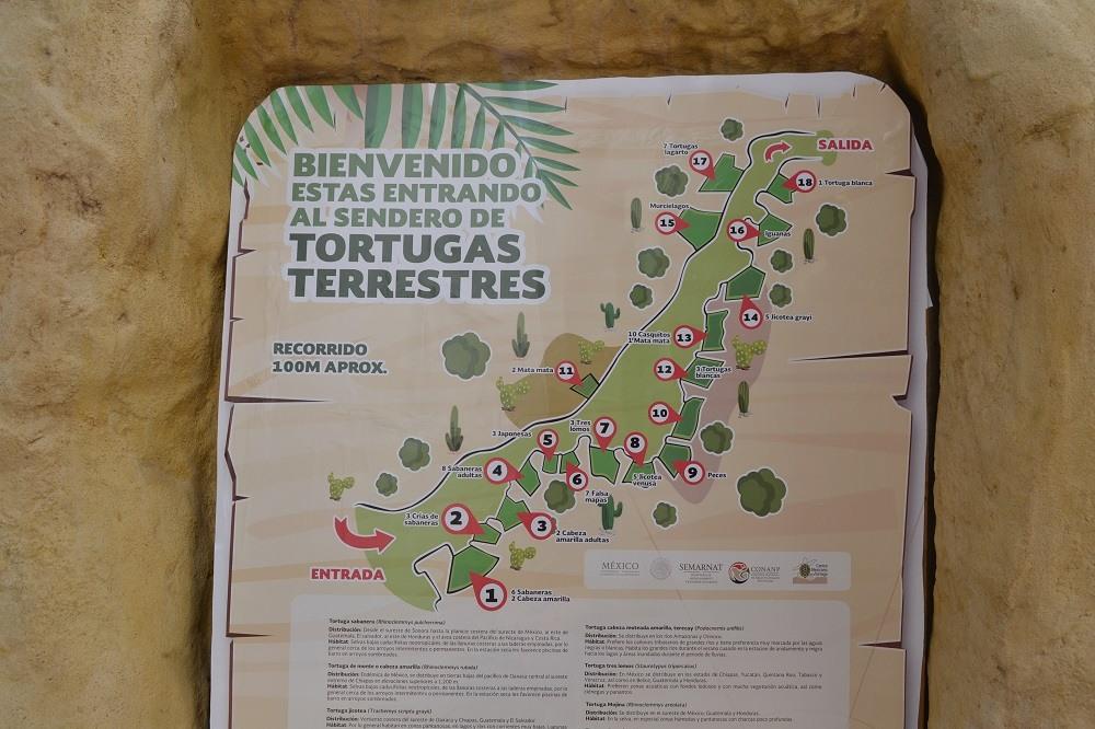 マスンテのウミガメ水族館地図の写真