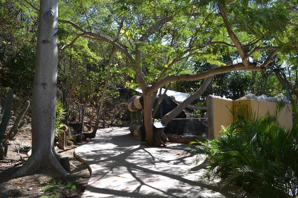 マスンテのウミガメ水族館の写真