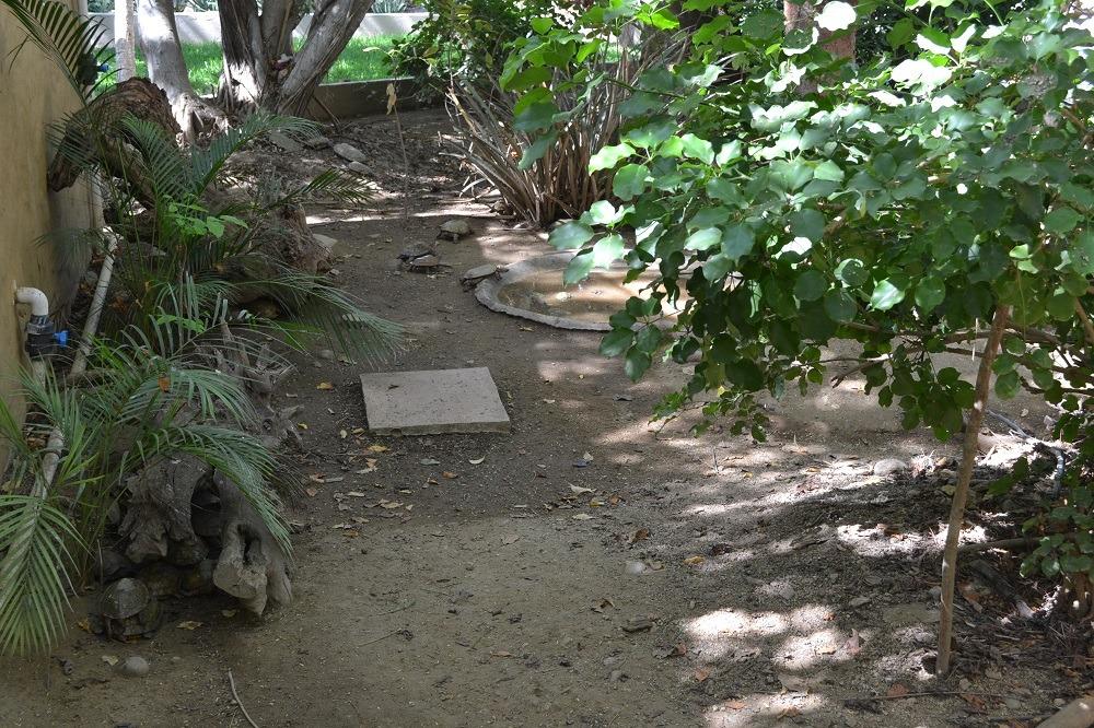 マスンテのウミガメ水族館のリクガメ達の写真