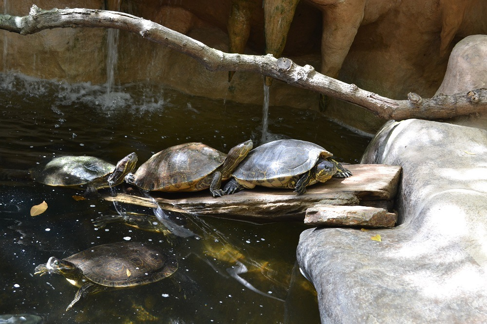 マスンテ(シポリテ)唯一の観光スポット海亀の水族館がある意味おもしろい