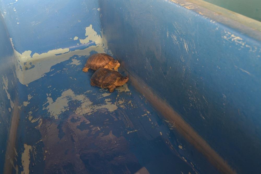 マスンテのウミガメ水族館の青いケースのカメの写真