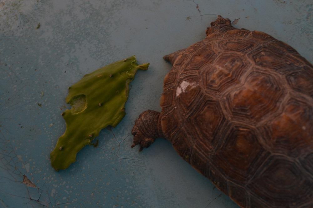 マスンテのウミガメ水族館のサボテンの餌の写真