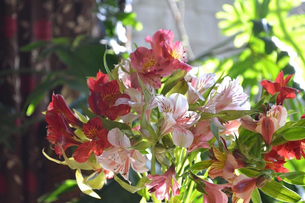 メキシコ・サンクリストバルで買ったお花の写真