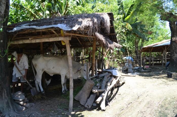 フィリピン人の家の庭の写真