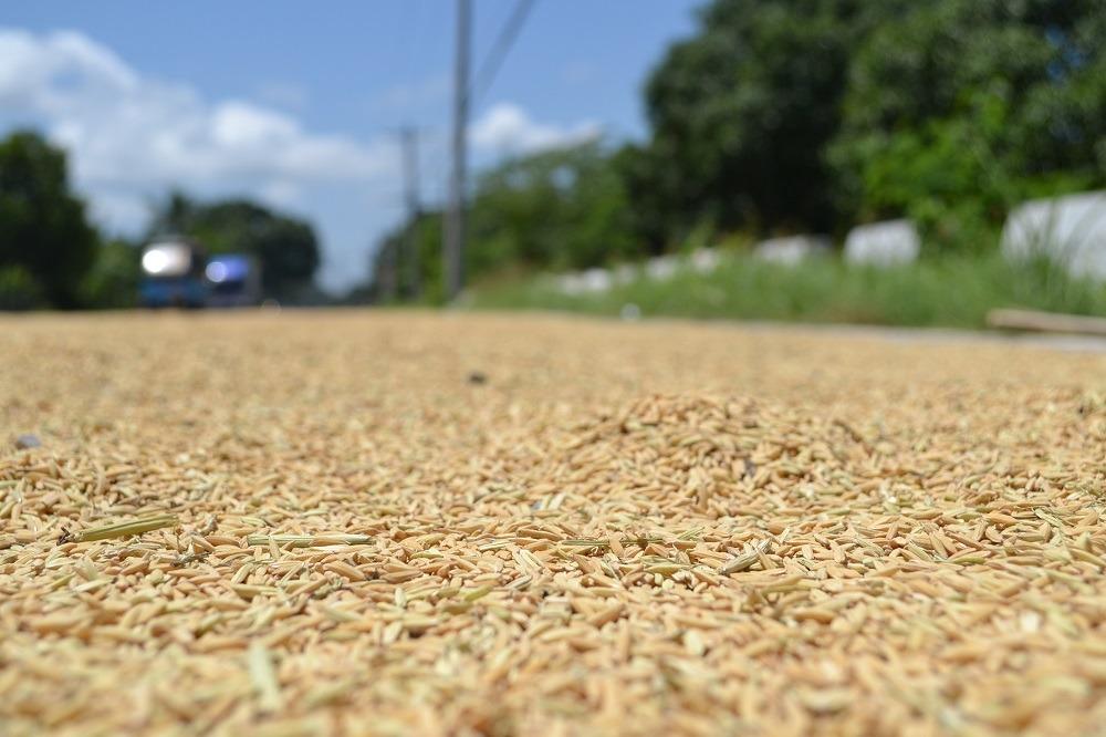 お米の収穫期のフィリピンの様子がおもしろすぎる件