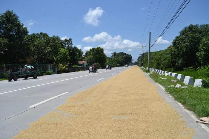 道路でお米を干してる写真