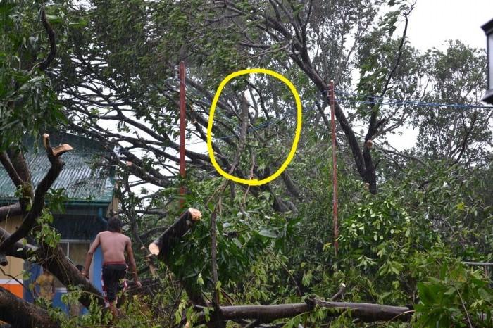 大きな枝が電線に引っかかってる写真