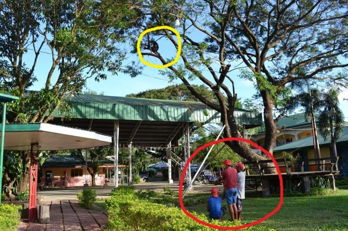 枝をへし折っている写真