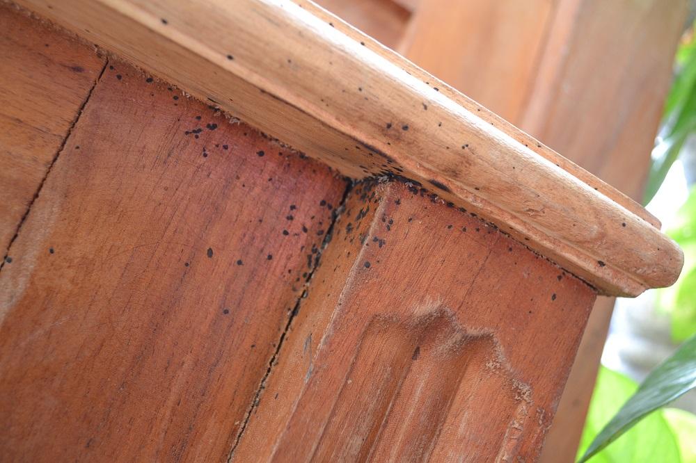 南京虫(ベッドバグ)の糞の写真