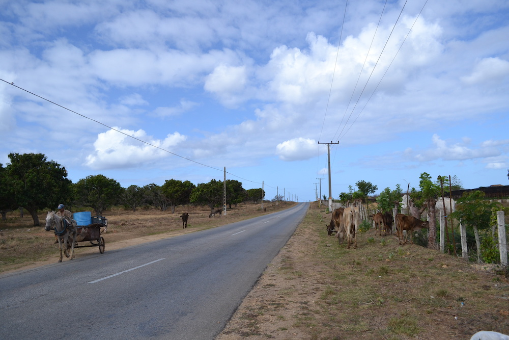 キューバ・トリニダーの郊外(馬車と牛)の写真
