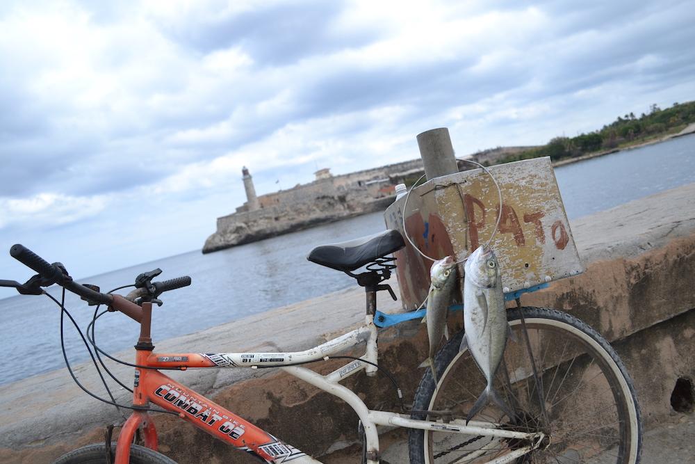 キューバ・ハバナで釣れる魚の写真