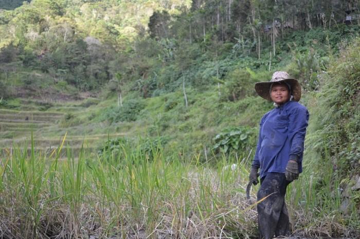 田んぼを掃除する女性の写真