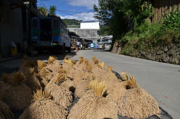バナウェのお米の干し方の写真