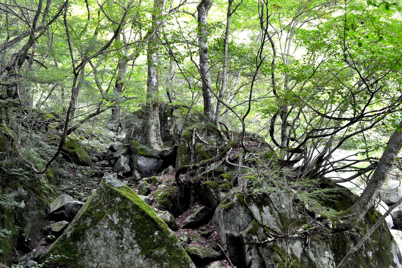 山梨県尾白川渓谷(山道・岩と木)の写真