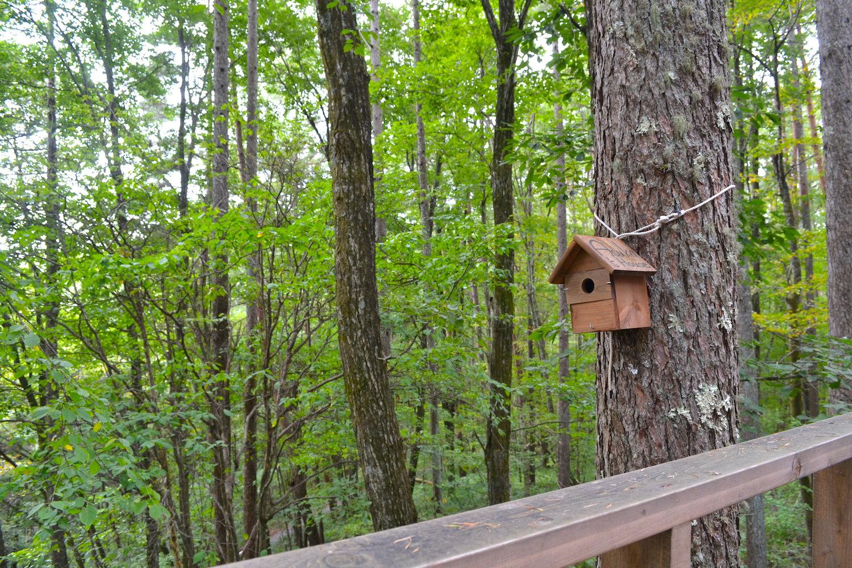 山梨県Airbnb一軒家(家周辺の森)の写真