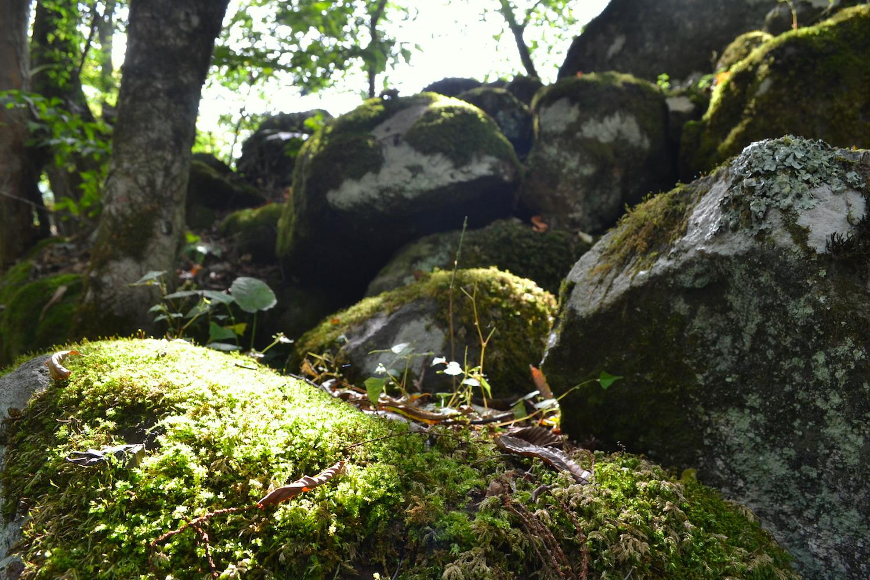 山梨県吐竜の滝(苔と岩)の写真