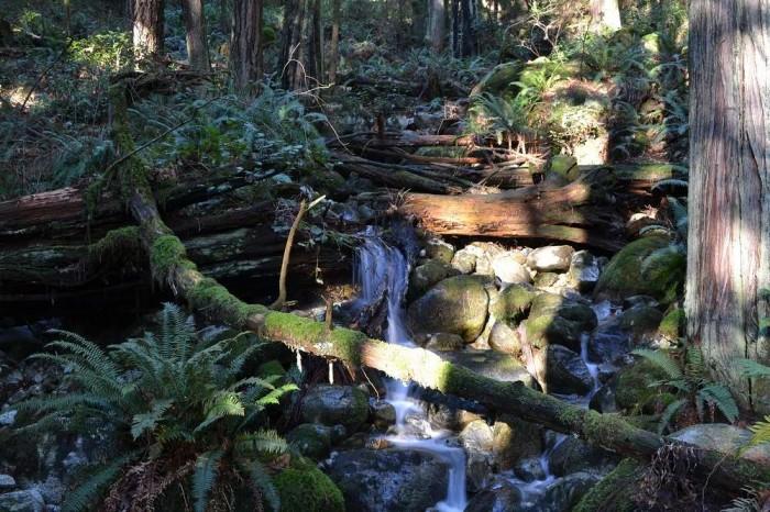 deepcoveの川と木々の写真