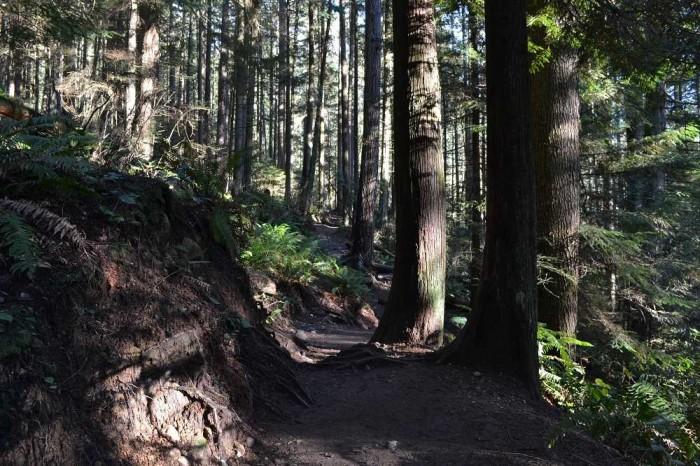 deepcoveのハイキング道の写真