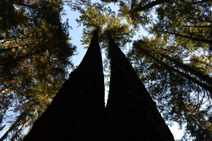 deepcoveの木々の写真