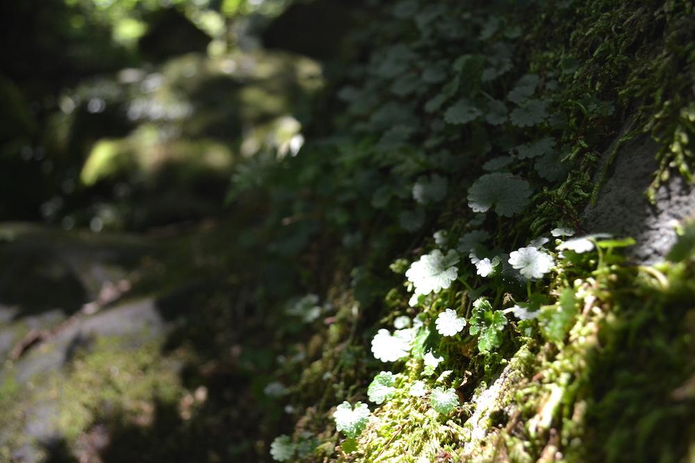 秋田県にかほ市象潟の観光スポット・元滝伏流水(苔)の写真