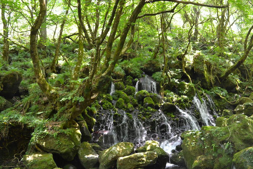 秋田県にかほ市象潟の観光スポット・元滝伏流水(岩と緑と湧き水)の写真