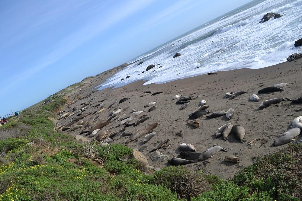 アメリカ西海岸アザラシのいる公園の写真