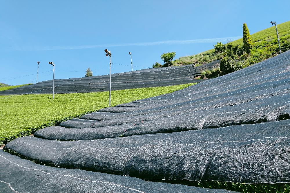 京都和束町・宇治茶収穫アルバイト(遮光ネット)の写真