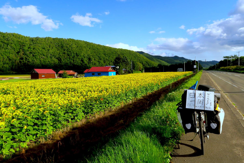 自転車日本一周:北海道のひまわり畑の写真