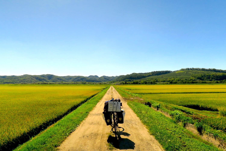 北海道の田んぼと日本一周自転車の写真