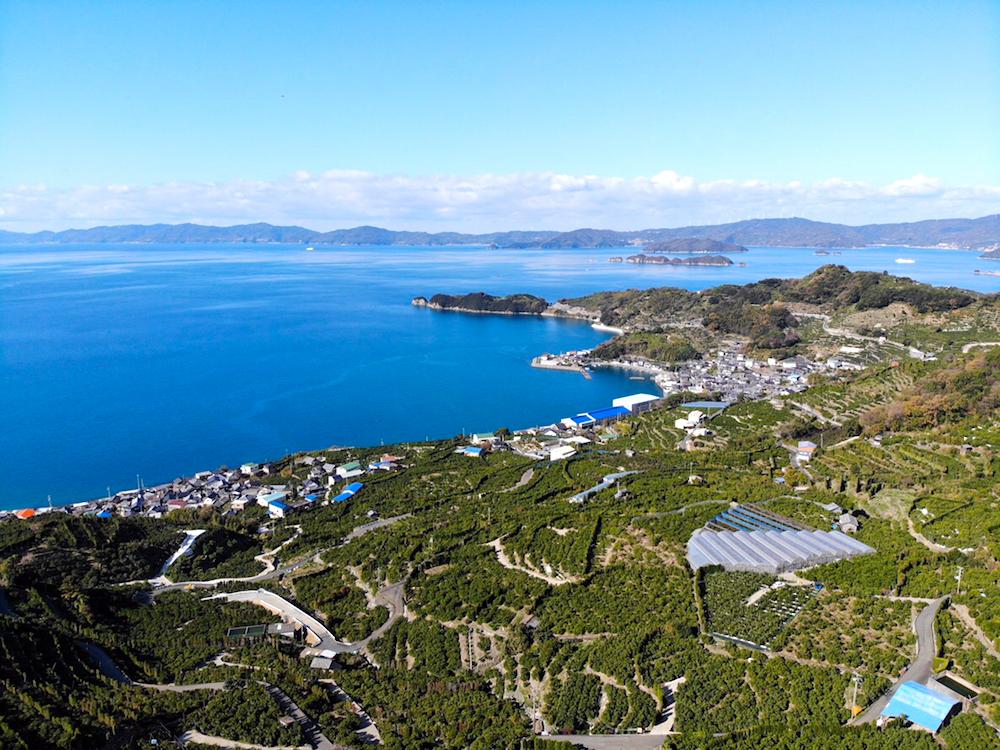 季節労働愛媛県でみかんアルバイト(ドローンでみかん山上空から撮影)