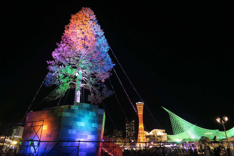 神戸メリケンパークの世界一大きな生木クリスマスツリー(ライトアップ)の写真
