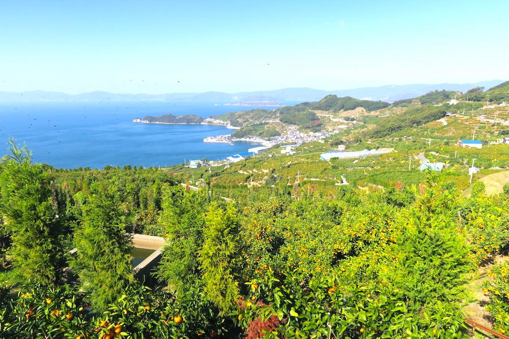 季節労働愛媛県でみかんアルバイト(景色の良い真穴の畑)の写真