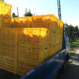 季節労働愛媛県真穴みかんアルバイト(トラックに積まれたみかんコンテナ)の写真