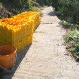 季節労働愛媛県でみかんアルバイト(畑の横に積んだコンテナ)の写真