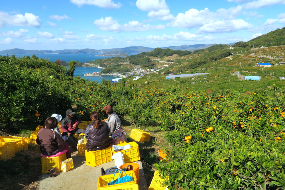 季節労働愛媛県でみかんアルバイト(最高の景色の中でお昼休憩)の写真