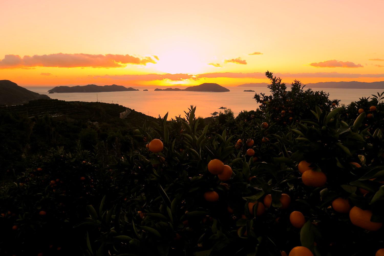 愛媛県八幡浜市真穴みかん山からの日没の写真