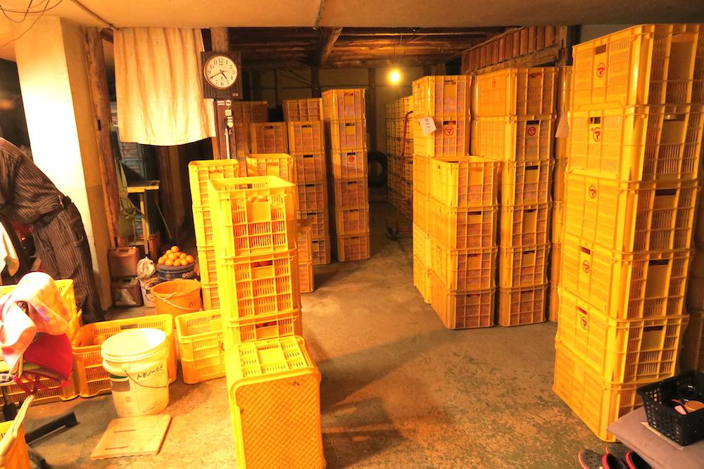 季節労働愛媛県でみかんアルバイト(みかんで溢れた倉庫)の写真
