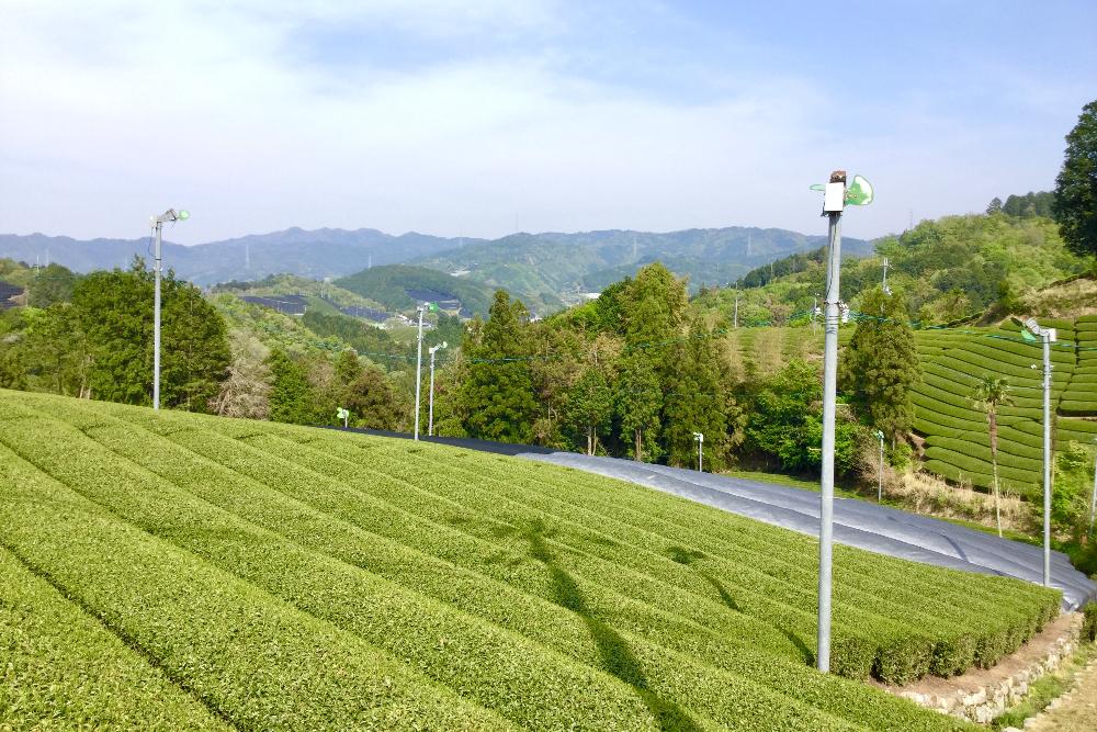 京都和束町・宇治茶畑と美しい景色の写真