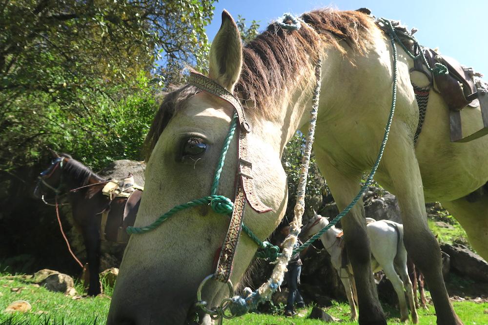 サンクリストバル・チャムラ日帰り乗馬ツアー(馬のアップ)の写真