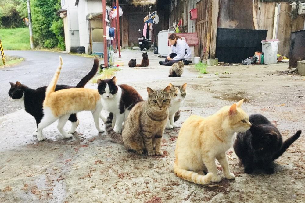 京都・和束町の猫村の写真