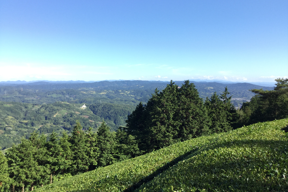 京都和束町・宇治茶畑|山の上の絶景の写真