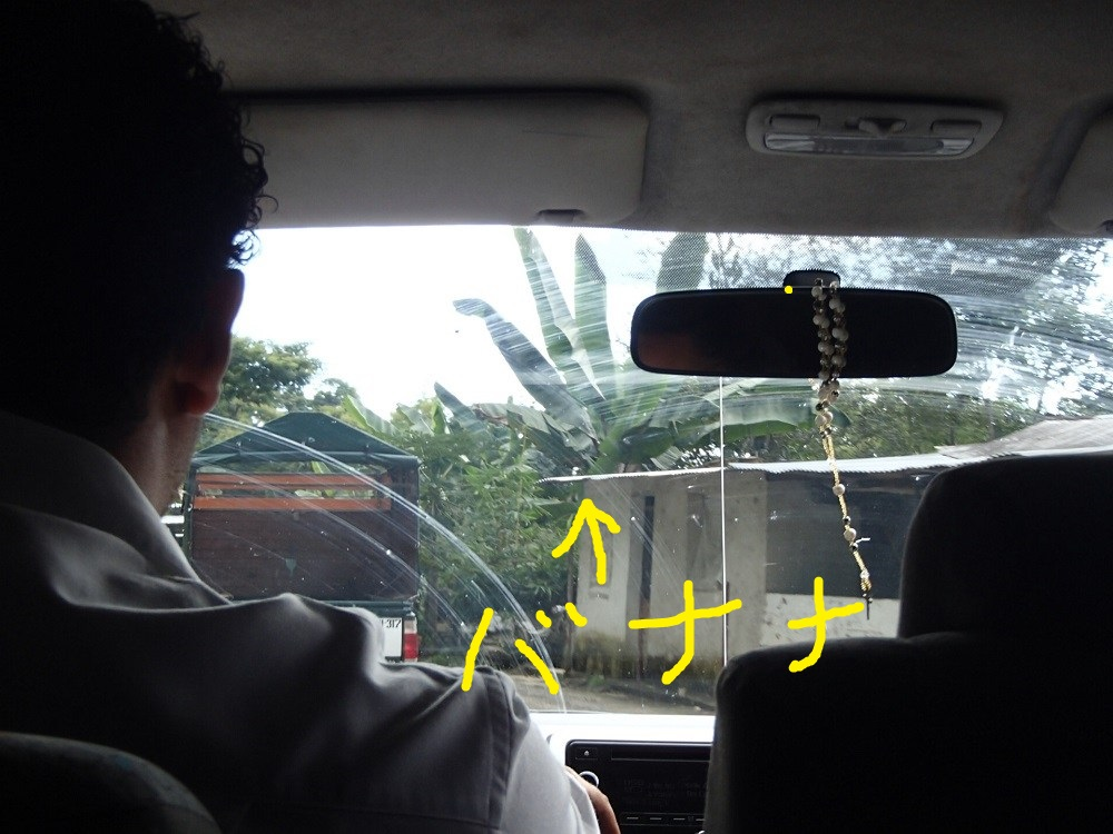 オアハカからポチュトラ行き道中(バナナ)の写真