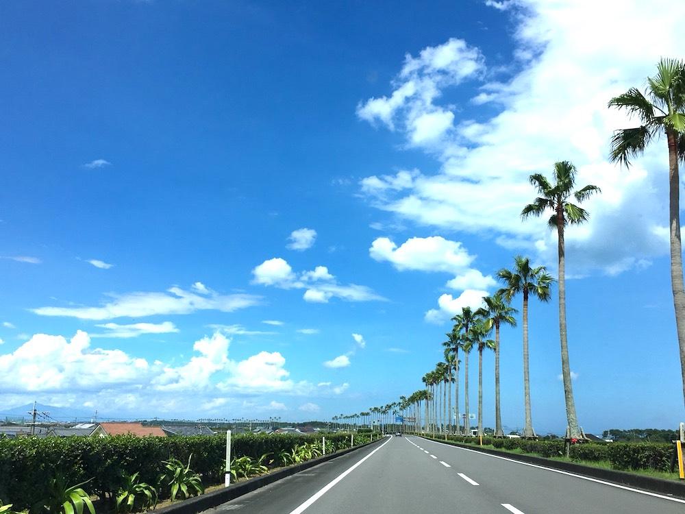 宮崎県のヤシの木道路の写真