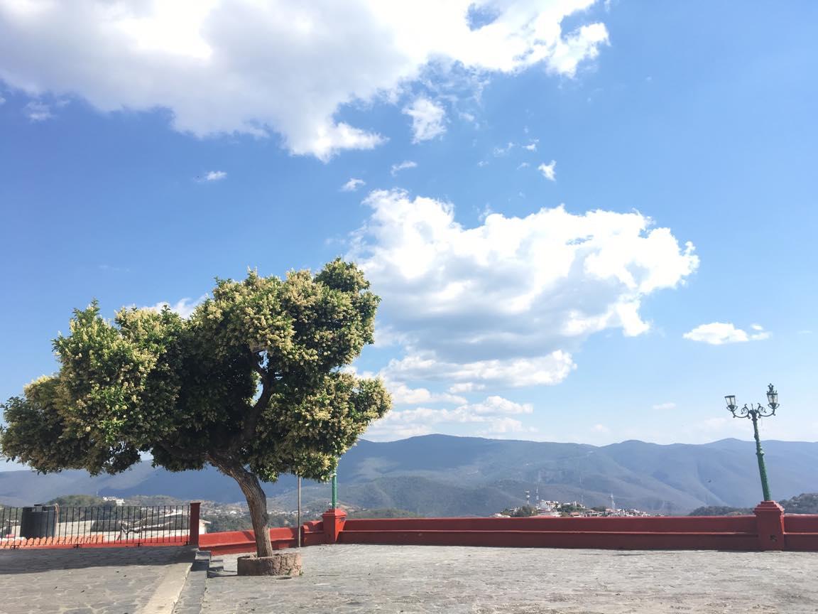 メキシコ・タスコの木の写真